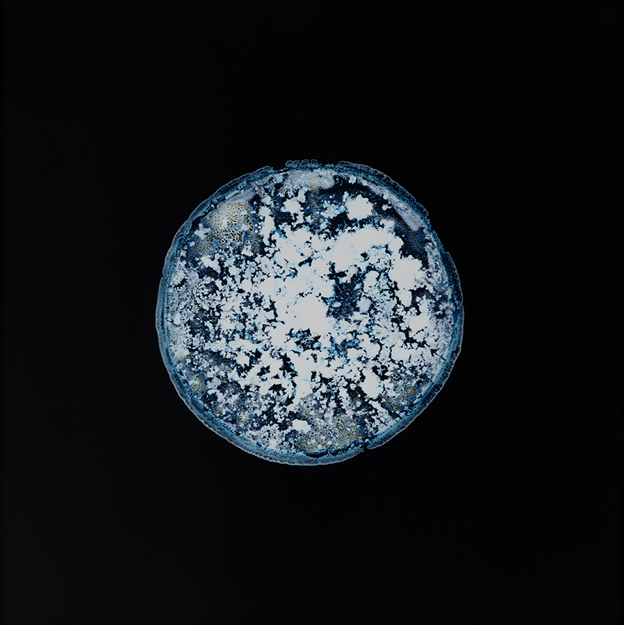 <p><em>All You Can Feel / Planets, Opium</em><span class='media'>Substance on photo negative enlarged as C-Print</span>27 1/2 x 27 1/2 in  (70 x 70 cm)<br>2013<br><a class='inquire' href='mailto:info@gildargallery.com?subject=Artwork Inquiry SSCH0008&body=I am interested in finding out more about All You Can Feel / Planets, Opium by Sarah Schönfeld'>Inquire</a></p>